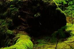 Wald Nachhaltigkeit Forstwirtschaft und Mitarbeiterführung