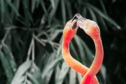 vorschau Two pink flamingos. Corona-Hilfen für HR