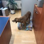 Dr. Dieter Graumann Liegenschaftsverwaltung Bürohund wedelt