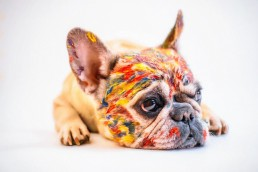 Bürohund wedelt