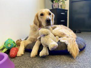 Bürohund Amy mit Kuscheltier, PPA Gesellschaft für Finanzanalyse und Benchmarks mbH