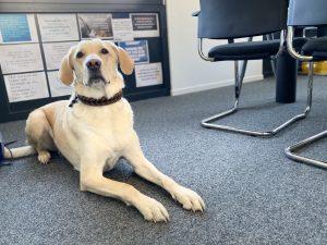 Bürohund Dakota, PPA Gesellschaft für Finanzanalyse und Benchmarks mbH