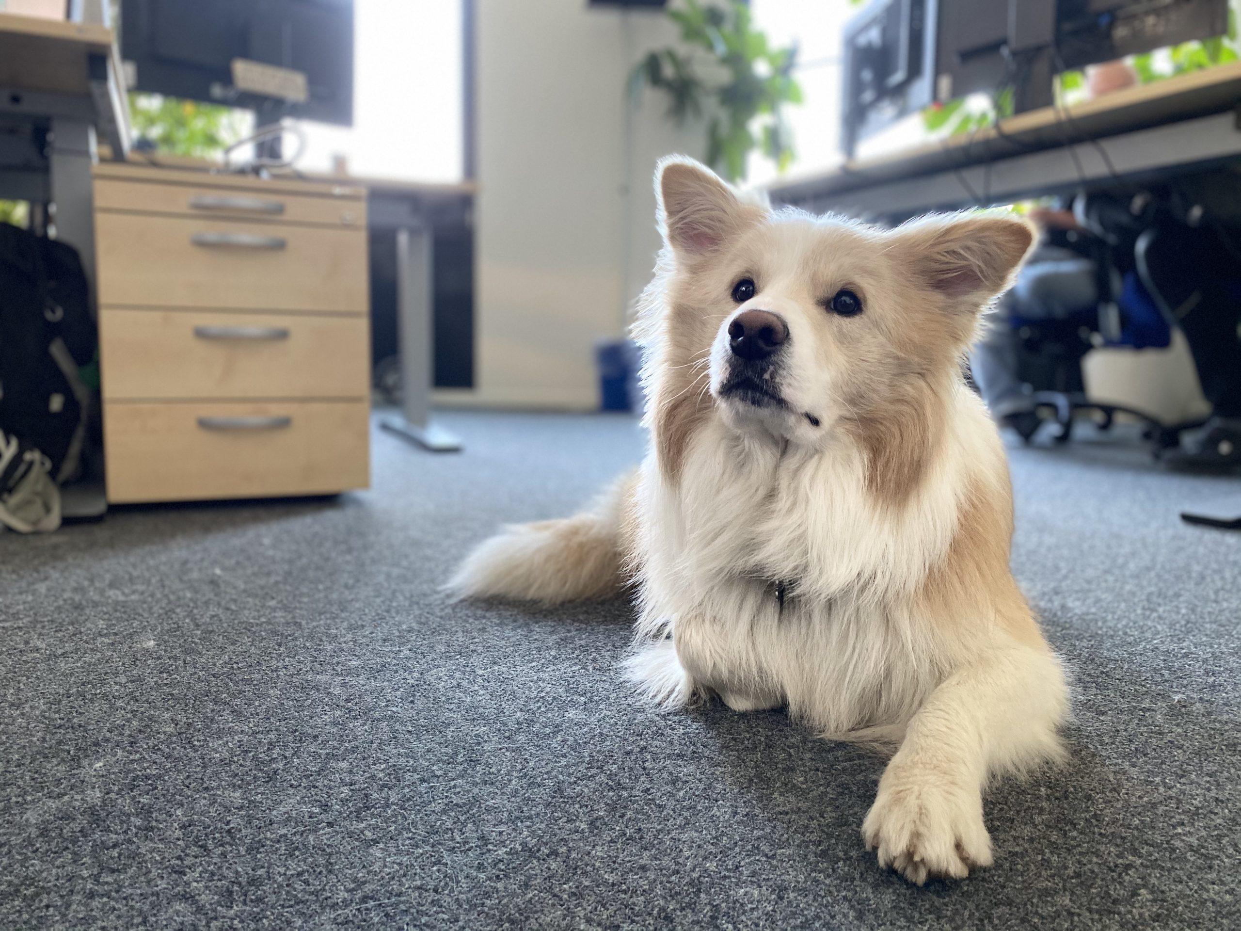 Bürohund Mo, PPA Gesellschaft für Finanzanalyse und Benchmarks mbH