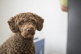 Ella Waterdog, Bürohund der Ferber Personalberatung