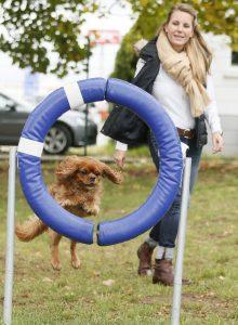 Bürohund Emily PURINA Hundesport